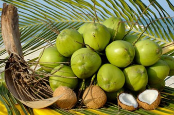 7 great utility of parts of the coconut tree
