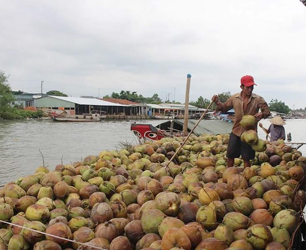 Coconut exports, peasants